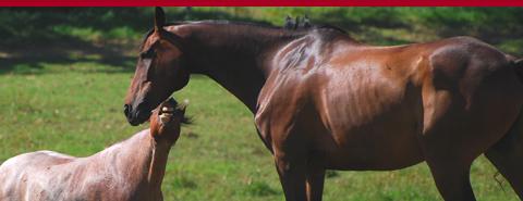slider-horse
